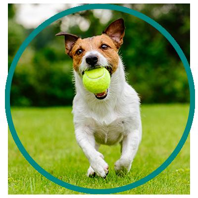Adopt - Humane Society of North Central Florida