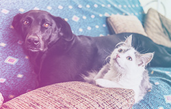 Rehoming Resources - Humane Society of North Central Florida